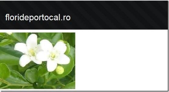 flori de portocal [][5]