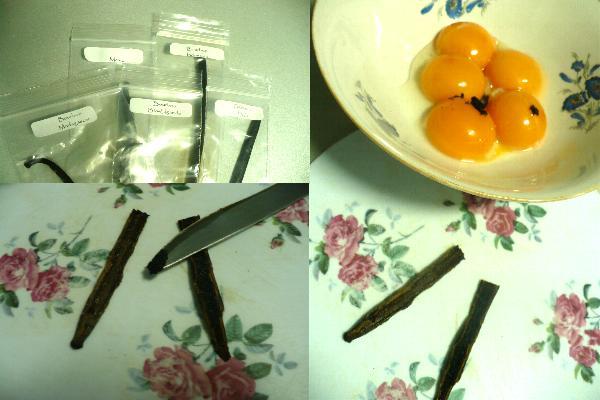 Tort Popica