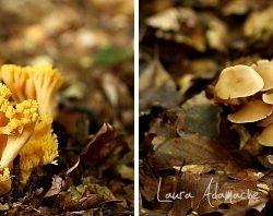 Ciuperci de Toamna